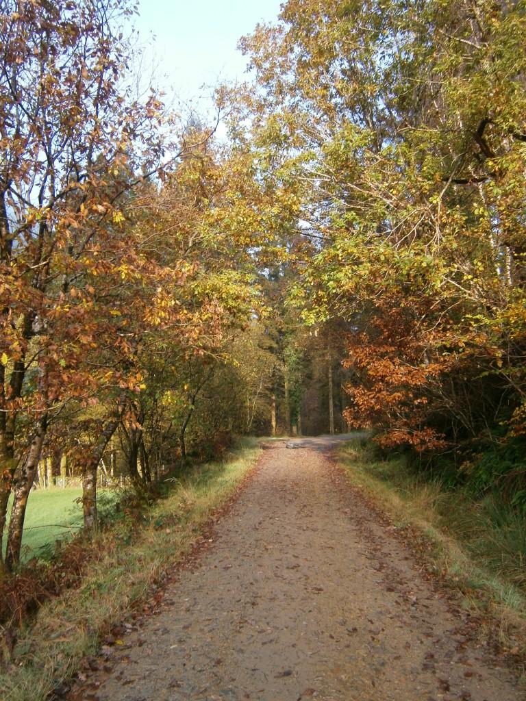 The Minotaur Trail